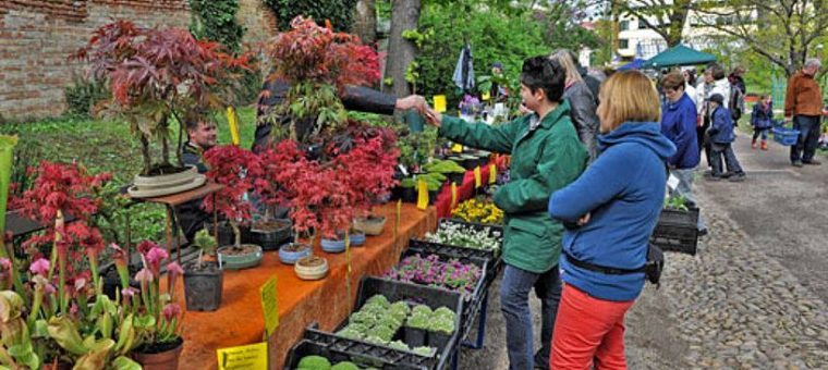 Burza raritných rastlín v Botanickej záhrade vo Viedni