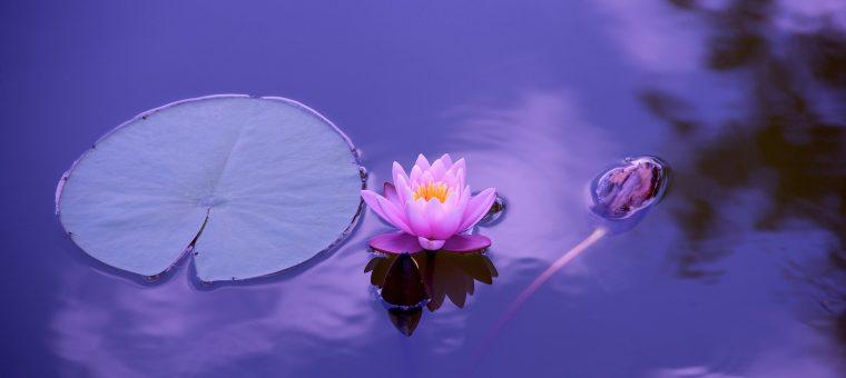 Meditácie upokojenia mysle a meditácie na buddhu súcitu